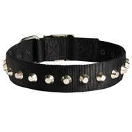Exclusive Nylon Dog Collar with Awesome Nickel Cones